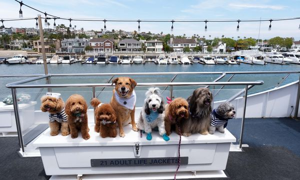 f4473f102663 Signature Series Cruises: Dogs on Deck in the Marina - Hornblower ...