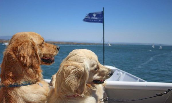 19th Annual Pet Day On The Bay Towel Blanket Drive Hornblower